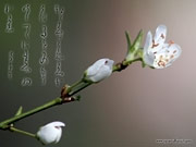 Japanese calligraphy wallpapers Spring